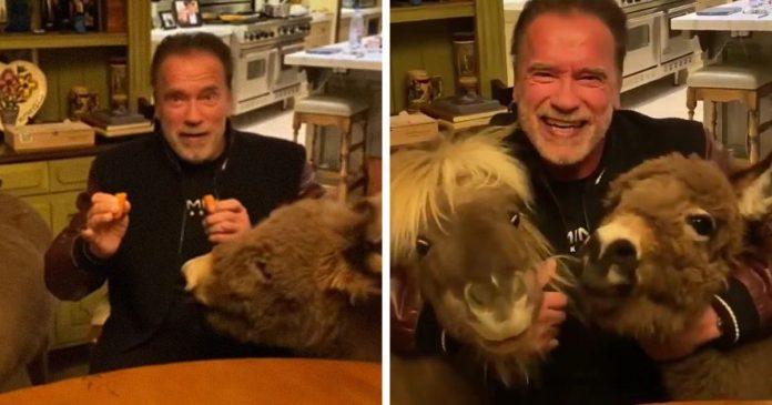 Arnold Schwarzenegger has his miniature horse and pet donkey