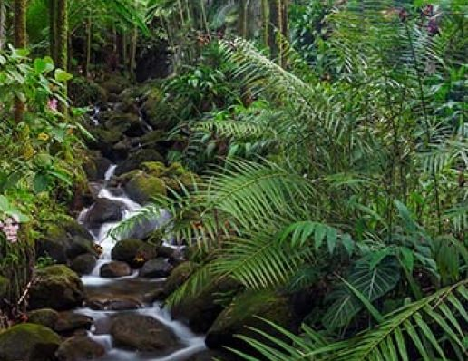 Tropical forests absorb less CO2, says new research