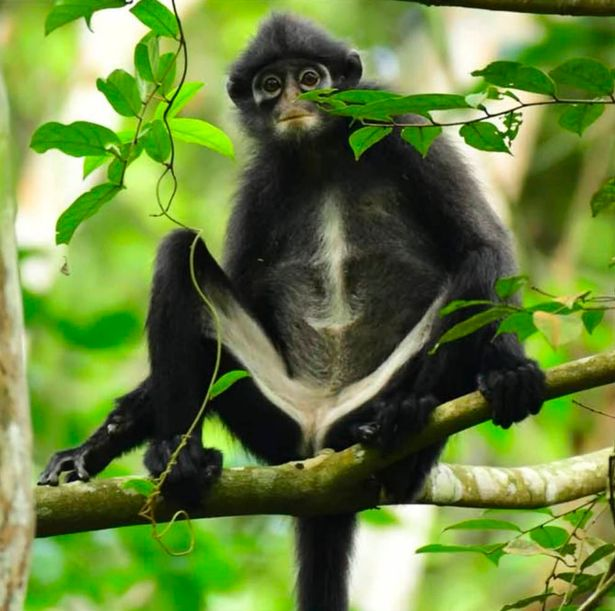New monkey species found hiding in plain sight, Report