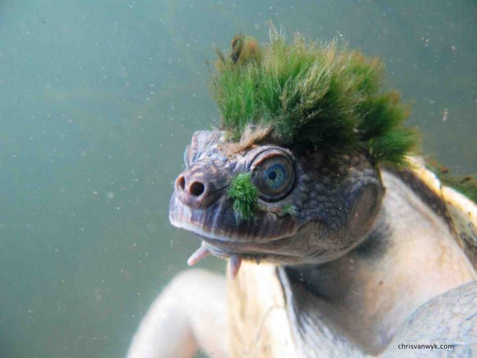 International Reptile Awareness Day: A List of the World's Strangest Reptiles