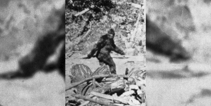 Lawmaker calls for Bigfoot 'hunting season' in Oklahoma, Report