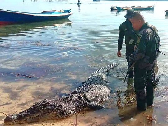 Hunt for crocodile as police searching for missing fisherman uncover human remains, Report