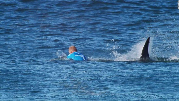 Chris Blowes: Surfer Wins Right to Keep Tooth from Shark Attack After Legal Battle